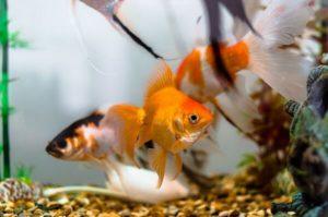 Аквариум с рыбками обеспечит релакс