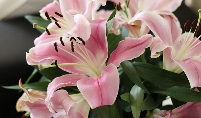 Милые лилии